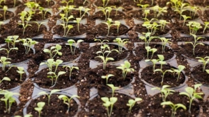 ステイホームにも! お手軽家庭菜園のススメと収穫野菜…|初心者でもできた! プランターでじゃがいも栽培 植え…|初心者でもできた! プランターでジャガイモ栽培 植え…|他