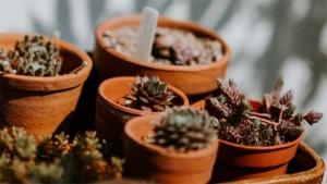 初心者でも簡単 100均観葉植物を育てるコツと I…|壁掛けプランター WALL HANGING PLAN…|渡辺美奈代 公式ブログ