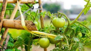 家庭菜園で楽しめるハーブ!育て方の基本情報|庭の手入れDIY 毎日の手入れの仕方 お金をかけず…|定番なのには理由がある! カキの魅力|他