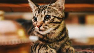 実は怖い猫カゼ!気が付かず重症化すると命にかかわるこ…|猫でよければ話聞くけど?関西弁の猫が人の悩みを軽くす…|2/15(土)より Cat's ISSUE×AKOM…|他