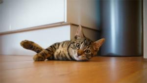 *でネコ島も客減り異変 活動家らがネコ支援(テレ…|ペロペロと猫が自分や相手の体を舐めるのは何のため? …|ゆっくりまばたき 親愛示す 猫と人 実験で初確認―英…|他