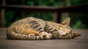 ネコの足や耳の形すっきり クロネコマーク 初めて変…|猫ホラー写真! 闇夜の中から こんばんにゃー 網戸に…|ねこぐらし 3 第1弾 上坂すみれ演じるミケ猫が登場|他