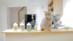 ネコVSゾウ タイで民家を荒らしていたゾウにネコが立ち向かう!→ネコが見事追…|ある猫のビフォーアフターが話題に 夏と冬で別人ならぬ 別ニャン