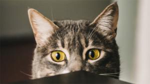 臆病な性格の猫のトリセツ 余計に怖がらせるNG対応3…|きみは本当に猫ちゃんかい……? モフモフぽってりなお…|ウクライナのネコタクシー 茶トラとお茶と毛布でおもて…|他