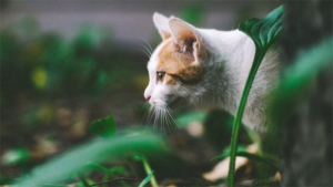 飼い主さんびっくり! シャキシャキの歯ごたえがたまらにゃい 白菜をおいしそう…|猫にこんな水を飲ませても大丈夫? 猫にまつわる 水のウワサ ウソ・ホント?(ね…