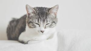 米女性が行う飼いネコの葬式 その様子を眺めていたネコ|猫をおんぶしてあったまろ♪ 背負う防寒具 あったかお…|狭いところでも何も倒さず器用に歩ける猫 秘密はキャッ…|他