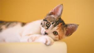 岩合光昭 ネズミ仕留めたカナダ猫 仕事終わりの油ひと舐め 週刊朝日 (AER…|沖昌之 よく似た寝姿の3匹の猫 まるで懐かしの団子三兄弟?