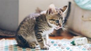 ひなんちゅ 甘えん坊な愛猫は 自分から湯船に入ってく…|なぜそこに? フォロワー10万超え 猫好きに癒し与…|ちょっと緊張して前足がプルプルしちゃう……! 猫トン…