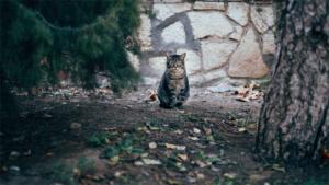 猫 ぐにににに……(必死) 出勤前に甘えてくる猫に…|まさにネコ製造機! 耳の部分まで可愛らしく仕上がる …|離れたくないニャ 寒さのあまりヒーターに限界まで近付…|他