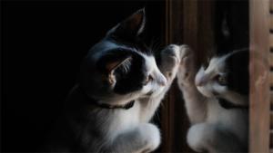洗濯機で寝てたネコ そのまま洗われてしまう顔面蒼白の…|猫と警備員の攻防 仲良くケンカ中? トムとジェリー展…|ドライバー研修中にまさかの居眠り!? 可愛いクロネコ…|他
