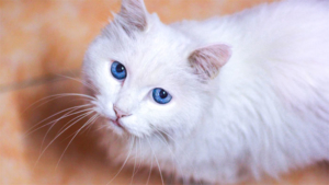 群馬の空き家でネコ十数匹死なせる 46歳男逮捕|どうしたの…? 模様のせいでめちゃくちゃ悲しそうな…|新しいTikTokチャレンジ 卵を守る猫 が海外でト…