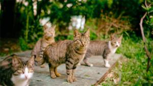 元ネタ全部分かるかな? SNSで人気の 二本歩行猫 …|猫との共生目指し去勢や餌管理 高知工科大生が学内見守…|保護猫譲渡 過去最多に *禍 癒やしはゴロニャ〜