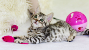ネコのマタタビ反応は蚊を避けるため 岩手大学などが3…|猫 猫マンション 満室ですニャ サイドワゴンを占拠…|猫駅長のニタマ 執行役員 ウルトラ駅長 に昇格|他