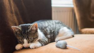 猫に触れると休日が消し飛ぶ!? 恐るべし癒やしパワー…|猫が十二支に選ばれなかったのは ねずみ のせいだった…|猫社会のルールを先輩保護猫から教わったキジトラ猫 た…|他
