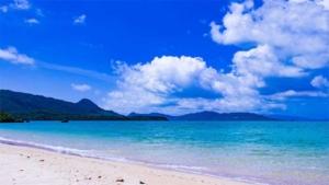 今年は多彩なオンライン企画も 沖縄国際映画祭 4月1…|沖縄の聖火リレー 本島公道は中止|もとむのカレーパンをプロデュースするアンド・フォース…|他