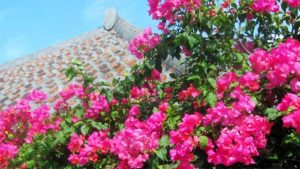 黄金のラフ なかいま強が自身の故郷・沖縄を舞台にカ…|沖縄でリアルライブと配信によるアイドルフェス開催 元…|ピアノ個人練習にホール無料開放 沖縄の小学生~大学生…|他