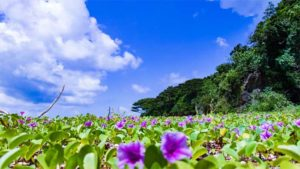 DeNA ジェット風船の応援禁止…沖縄でのオープン戦…|楽天 沖縄 久米島での1軍キャンプ打ち上げ|川崎F練習試合で沖縄初のスポーツボランティア運営協力…|他