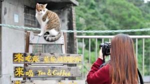 これも新型コロナウイルス予防 台湾のドラマでキスシー…|台湾でも3月の女子ツアー中止 日本勢に影響も|台湾近海の演習は戦闘能力高める狙い 中国軍が声明|他