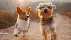 犬の散歩中にクマに襲われる 67歳女性が頭や肩かまれ…|ドッグランで他の犬と遊ぶことができません どうしたら…|誰だ 家の中に食パンを落としたのは? コーギーのお…|他