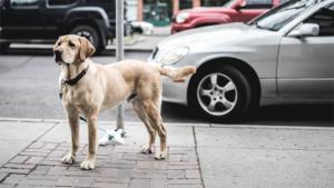 犬に優しいイングランドの田舎町を歩いてみた!お散歩大…|獣医師監修 犬は飼い主さんを喜ばせたいのか? 本当…|ニャンだコレ!? 猫が発見したものは 佐々木まことの…|他