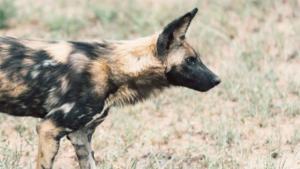 たった一匹で最期を迎える犬や猫たち……高齢者が飼いき…|犬写真スタンプ初登場! 9/23日本介助犬協会のオ…|*感染の有無かぎ分ける空港犬 PCR検査より早い…|他