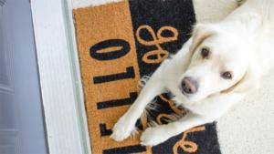 PS保険 獣医師ダイヤル に寄せられた誤飲に関する問…|毎日ウインクしているみたい!熊本から来た雑種犬の ハ…|ペットの名前ランキング2020 犬1位は ココ 猫…