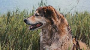 歩きたい…サーフィンが得意な犬が車椅子の高校生に…|犬にかまれる人の数が減らないニュージーランド…意見が…|*禍でペットの飼育放棄が急増!?100%ほめる犬…|他