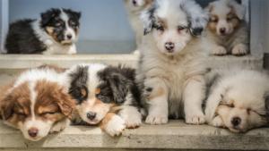 店の犬にかまれ客2人けが 神戸 経営者ら2人逮捕|店で犬が客にかみつく 夫婦逮捕|飲食店内で大型犬放し飼い 女性客2人かまれ負傷|他