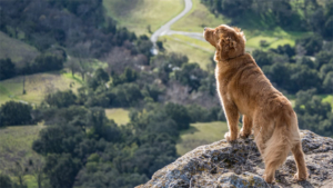 日本のペット家族 犬に囲まれて自分を犬だと思うアメシ…|老犬の死を覚悟! 涙ぐみ動物病院へ向かうとまさかの診…|コレ英語で言えますか? これじゃなきゃダメ (F…|他
