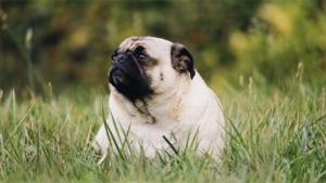 犬の寿命は犬種や大きさで違う!? 長生きする犬種とは…|環境への取り組みやストーリーがわかる!犬と人のショッ…|いきもの語り 老犬・老猫ホーム 東京ペットホーム …