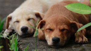笑福亭鶴瓶 犬の置物に紛れ込み…お茶目な姿に どれが…|新しいベッドを買ってもらった犬 飼い主さんが思わず犬…|散歩中 犬好きの守衛がいる手前で立ち止まった飼い主 …|他