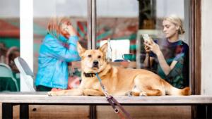 6年前からずっと仲良しの犬とイルカ 種族を超えた友情が美しい(米)|極寒地の そり犬 9500年前にはすでに活躍していた 最新研究(ナショナル …