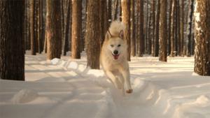犬の1年は人間の7年 誤り? 年齢ごとの成長ペース…|犬の1年は人間の7年 の誤りを指摘 年齢ごとの成長…|犬任せの旅に同行取材 シェルパ斉藤に聞く歩き旅の魅力|他