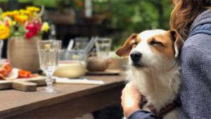 犬の服と靴の市場の生産と需要の分析2020年から20…|犬のいる暮らし : 真野恵里菜 公式ブログ|王子に何をさせてるんですか 山崎育三郎 犬の姿で…|他