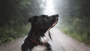 二人六脚:保護犬イブと暮らして/2 共同生活の始まり 同じ目線で考える 愛らしい動作 苦労忘れ /栃木