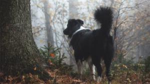 二人六脚:保護犬イブと暮らして/3 脱走 足りなかった信頼関係 首輪持った手かまれ流血 /栃木