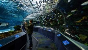 わくわく!夜の動物園 昼より活発なカバやジャガーを間…|茨城新聞 アクアワールド茨城県大洗水族館長の藤森さ…|200万匹に1匹の割合! 青い色をしたロブスターを飲…|他