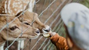 福岡市動物園でキリンの赤ちゃん誕生 同園初のアミメキ…|シマウマ脱走? 京都市動物園で捕獲訓練(産経新聞)|お母さんにギュー! オランウータンの赤ちゃん 円山動…|他