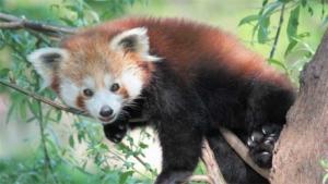 動物園運営シム Planet Zoo PC向けにリリ…|11/11はチンアナゴの日!京都水族館でチンアナゴの…|とべ動物園で温暖化学習行事 動物と地球環境考える|他