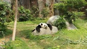 アメリカバイソン15日到着 おびひろ動物園に 岩手の…|新江ノ島水族館の公式LINEスタンプ配信中 えのすい…|アザラシ夏にもお引っ越し おびひろ動物園 昼寝や食事…|他
