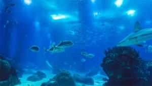 実際に触って感触確かめられる生き物も…企画展 にゅる…|P.A.WORKS最新作 白い砂のアクアトープ に和…|かごしま水族館 子どもたちが一日飼育係(KYT鹿児島…|他