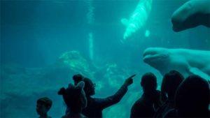 テカリや濡れ感でキモカワ度が倍増 京都水族館のツリー…|テカリでキモカワ倍増 京都水族館ツリー|アシカがマジックを披露!? サンシャイン水族館に新演目|他