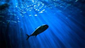 京都水族館の ルージュの伝言 を可愛すぎる声で歌うイ…|リン 7歳の誕生日 名港水族館のシャチ|心がポカポカする 小さい頃を思い出した 涙の引…|他