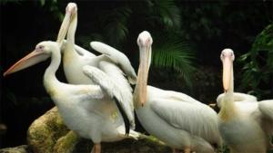 ホテルメトロポリタン 川崎 カワスイ 川崎水族館チケ…|千歳で野鳥と飛行機の写真展|京都市動物園 大人のための飼育体験会|他