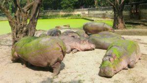 アクアマリンふくしまでカワウソ飼育が始まって10周年…|王子動物園のテーマソングに合わせた ダンス が完成し…|パンダのタンタン 25歳の誕生日を祝う 神戸 王子動…|他