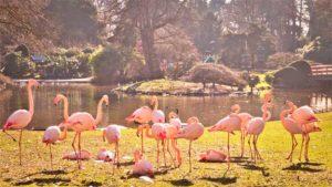 はしのえみ 公式ブログ|水族館マーケット2020分析 業界規模 シェアリーダ…|札幌市円山動物園が1カ月ぶりに部分開園 臨時開園も|他