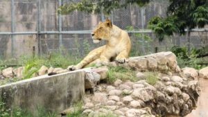 東京都 上野公園や井の頭公園を再開 上野動物園は休園…|キリンの赤ちゃん 26日一般公開 とべ動物園|進む施設再開 水族館では午前4時半から並んだ人も 免…|他