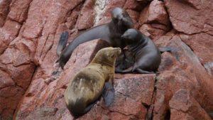 経路案内アプリの検索スポットランキング2019 地域…|サンシャイン水族館 フォトジェニックな生き物を集めた…|動物園のリスザル12匹行方不明|他