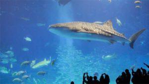 思い出のプールに泳ぐサメ 廃校を水族館にした過疎の町…|チョコレート?の魚 名港水族館で展示:動画|サンシャイン水族館 特別展 いきもの×光×色=イキモ…|他