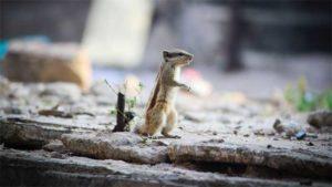 人のいない水族館をアシカが見学 動画|徳山動物園で 60周年記念ポスター 表彰式 休園明け…|ゴマフアザラシの赤ちゃん誕生 加茂水族館 今季2頭目|他
